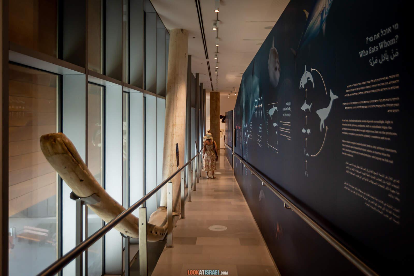Тель Авив, музей естественной истории. Музей природы | Steinhardt museum of natural history in Tel Aviv | מוזאון הטבע בתל אביב | LookAtIsrael.com - Фото путешествия по Израилю