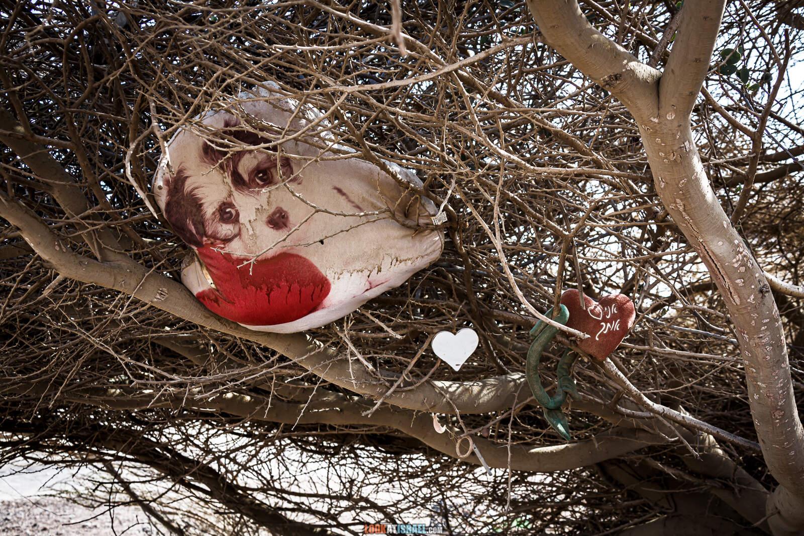 Кладбище домашних животных (собак), Эйлат, Израиль | LookAtIsrael.com - Фото путешествия по Израилю