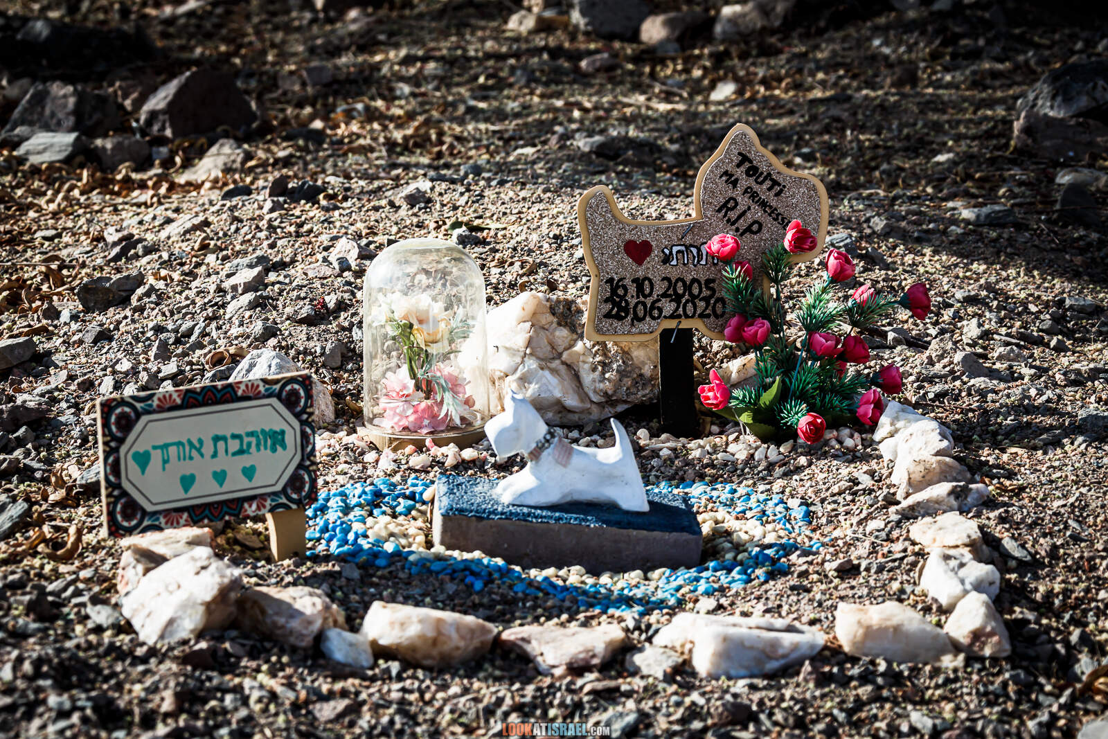 Кладбище домашних животных (собак), Эйлат, Израиль