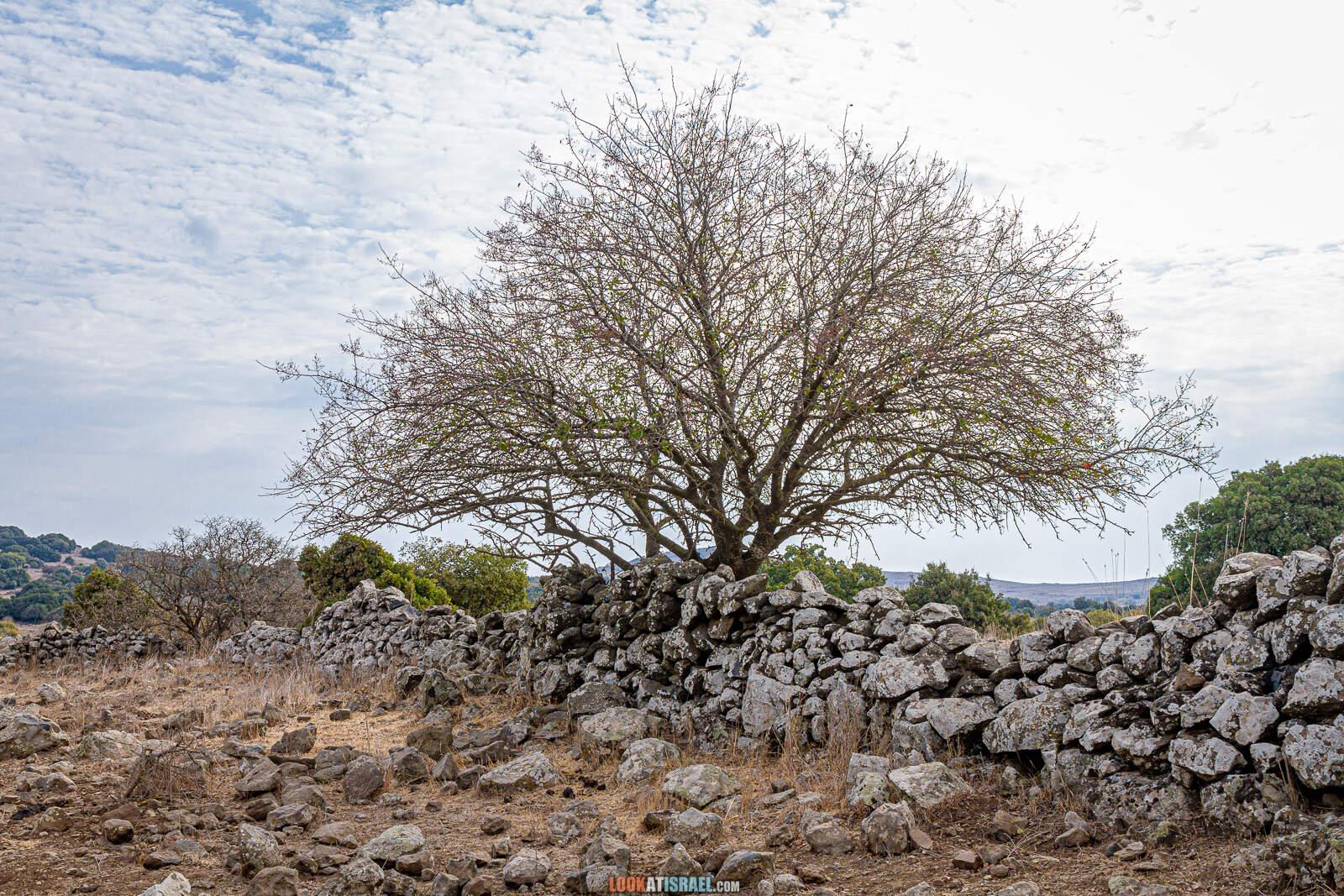 Цветение Штернбергии и Осенников на Голанских высотах | LookAtIsrael.com - Фото путешествия по Израилю