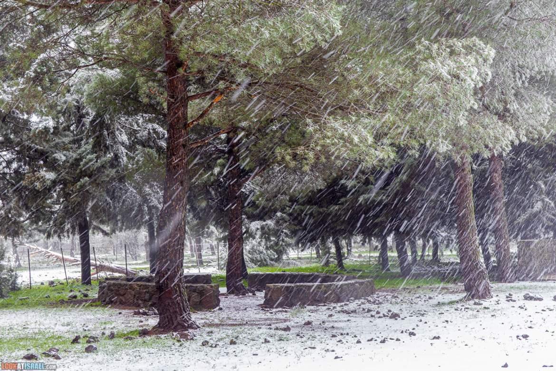 Снег на Голанских высотах - Зима во время карантина | LookAtIsrael.com - Фото путешествия по Израилю