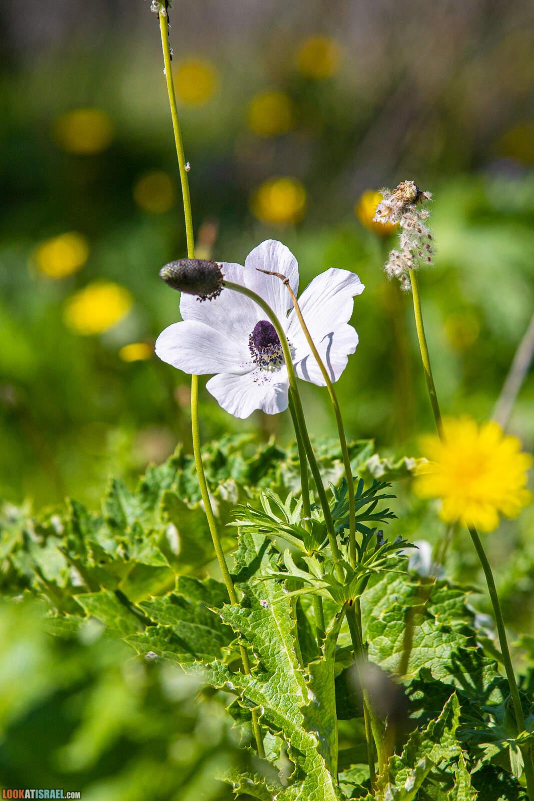 Цветение в лесу Меггидо
