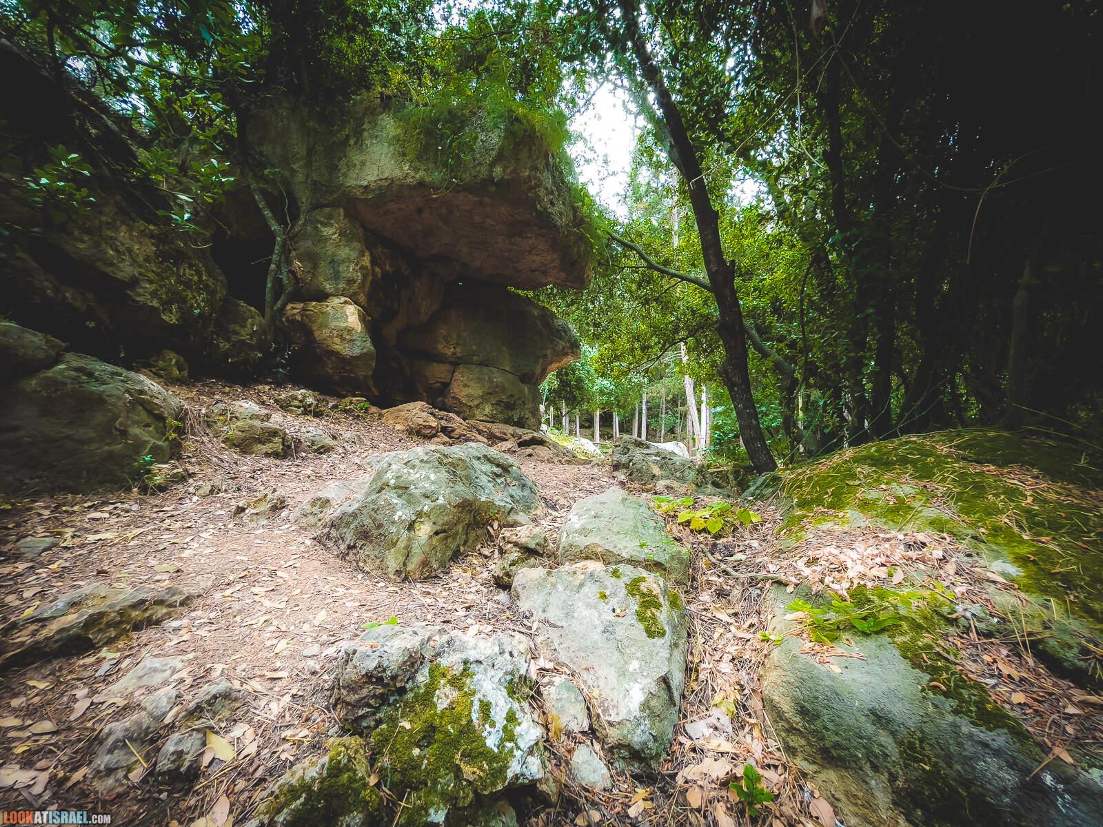 Таинственное сказочное место в лесу на горе Кармель   LookAtIsrael.com - Фото путешествия по Израилю