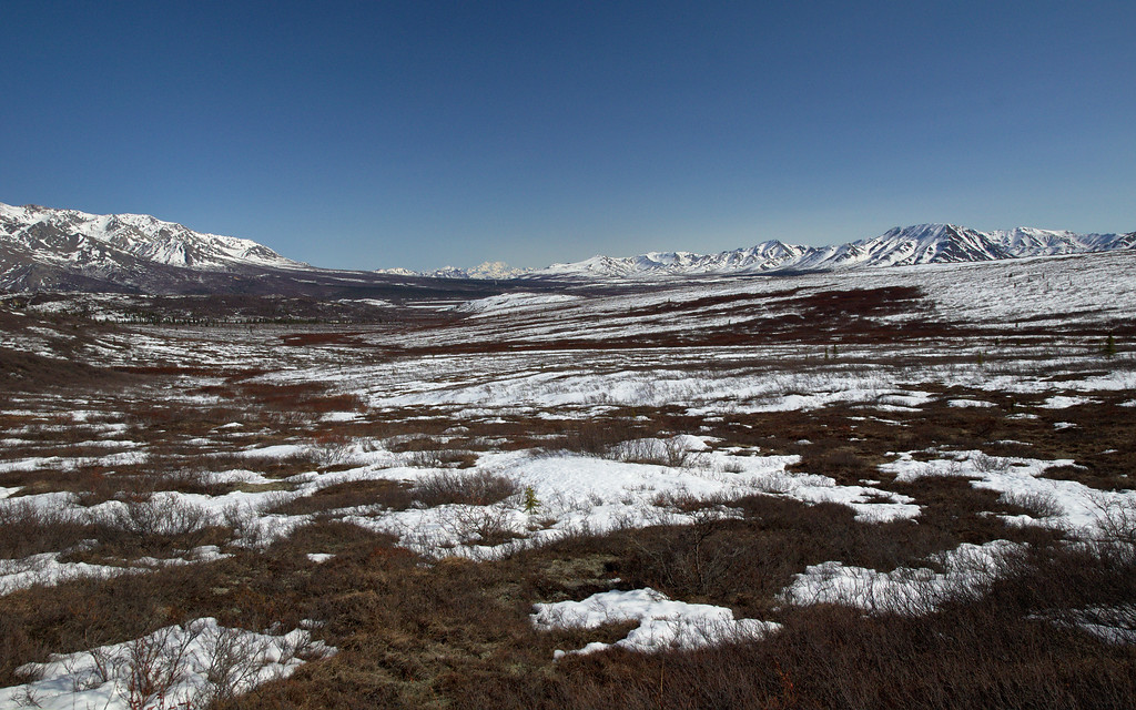 Just west of the Savage River looking East in Denali National Park.