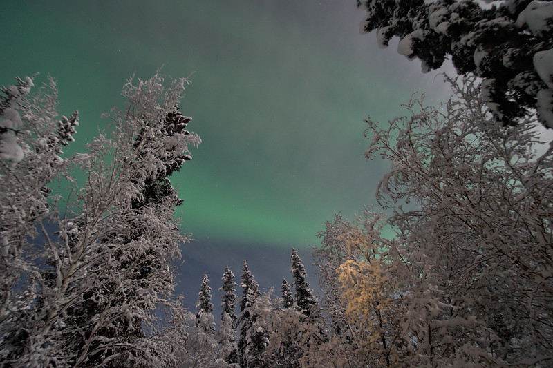 Cranking my neck back on our front porch to watch the northern lights through the snowy trees.
