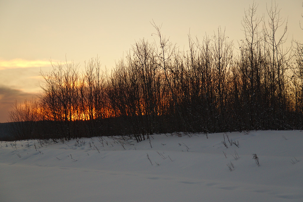 The sunset from behind the willow, birch, and alders.