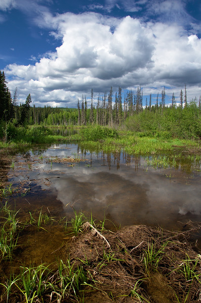 ponds and sloughs along Chena Hot Springs Road