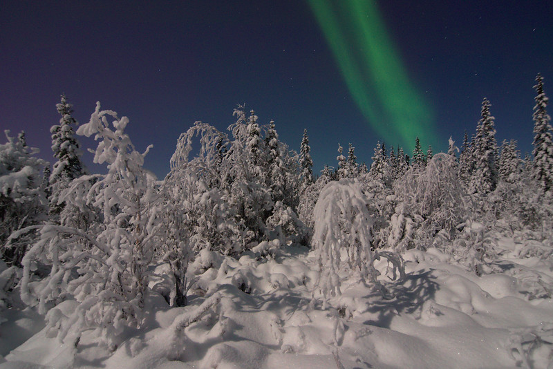 Snow covered taiga with some aurora borealis
