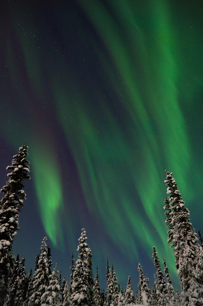 We've had absolutely incredible northern lights displays the last few nights in Fairbanks. The nearly full moon wonderfully lit all the snow draped on the trees. It's been tough to get any sleep the last few days . . . yet I hope this keeps up!