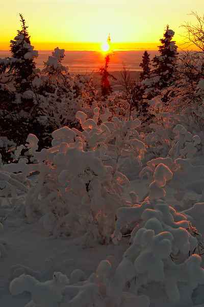 The sun breaks the horizon - beautiful golden light on the snow