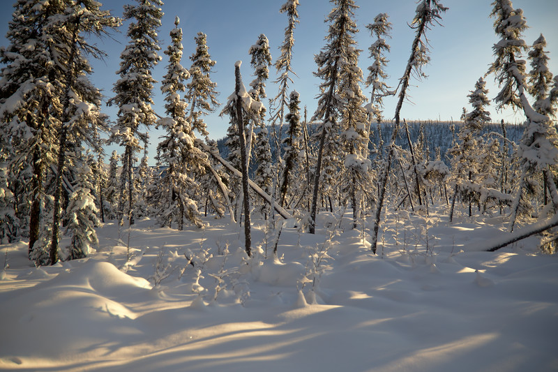 The snowforest, or boreal forest.