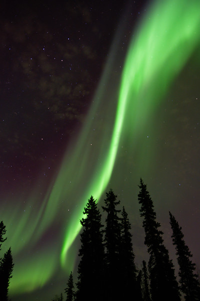 Aurora borealis over boreal forest