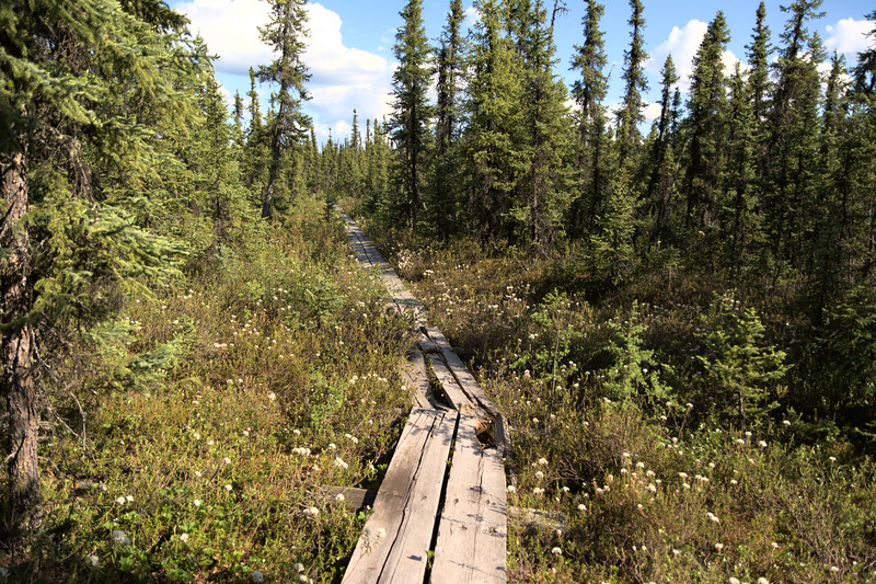 Twin Bears Trails