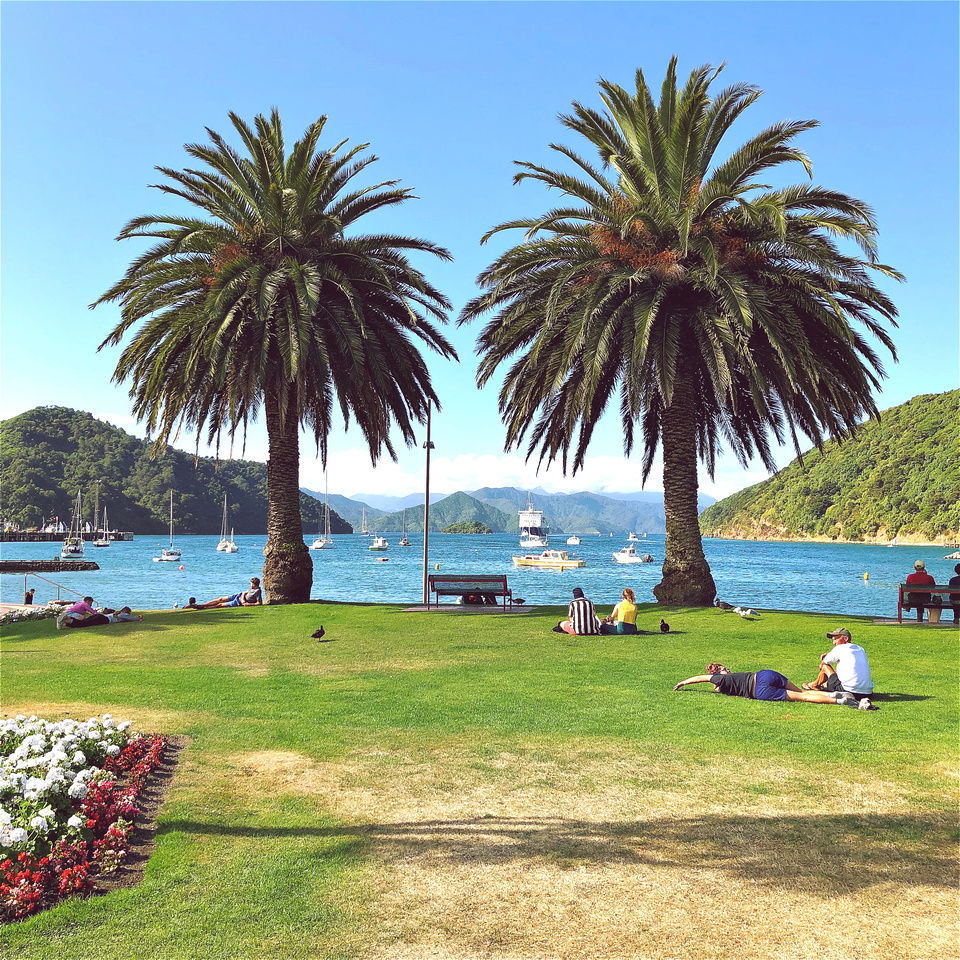 Twin palms in Picton, New Zealand, at the waterfront harbour and park.