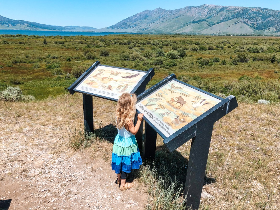A wide-angle view of Henrys Lake and an interpretive sign at the inlet to the lake, from hiking trails that lead out from Idaho's Henrys Lake State Park.  A young girl looks at a sign about area wildlife and facts about various species native to the region.  Reeds and other marshland vegetation grows in the foreground, and the Targhee National Forest and mountain range are visible in the distance.