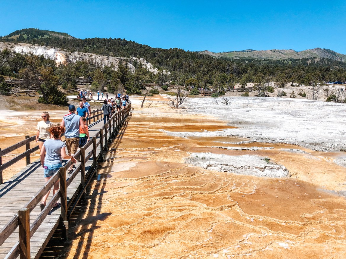 Yellowstone Hot Springs: A top view of Yellowstone's Mammoth Hot Springs. Tourists walk along a raised wooden walking path that crosses the sprawling hot pools of the massive thermal spring.