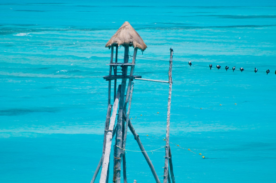 Best Stock Photo Sites: Coastal birds sit on a cable or wire connected to a small thatched-roof shack in the Caribbean Sea off the coast of Isla Mujeres, near Cancún in the Yucatán Peninsula.