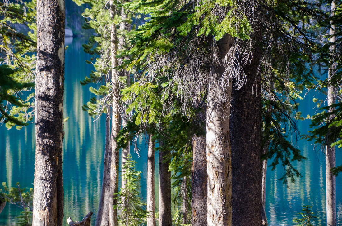 Pine trees on the edge of Alpine Lake in the Sawtooth Wilderness.  Sunlight reflects off the surface of the lake beyond the alpine trees at dawn.