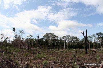 Deforestation in the Peruvian Amazon - photo by Rhett A. Butler