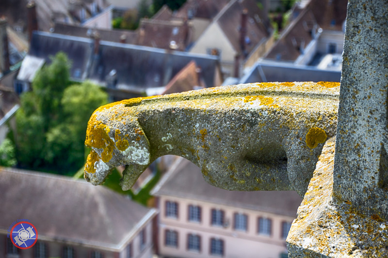 A Gargoyle on the North Spire (©simon@myeclecticimages.com)