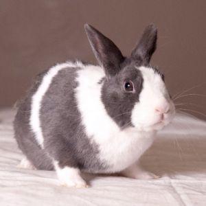 Gillian: Dwarf, Rabbit; Vancouver, BC