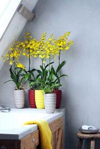 6 Plantes Pour Votre Salle De Bain Gamm Vert