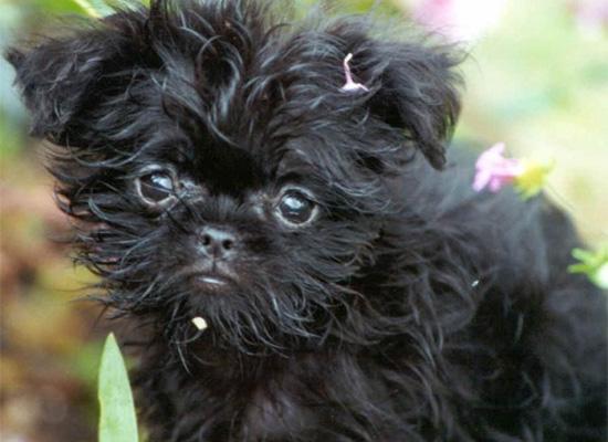 https://i1.wp.com/photos.pouryourheart.com/wp-content/uploads/2018/12/Famous-Dog-Breeds01.jpg?w=640