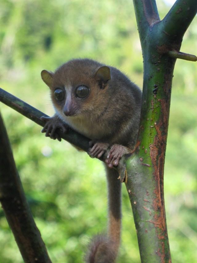 https://i1.wp.com/photos.pouryourheart.com/wp-content/uploads/2018/12/GERP-mouse-lemurs.jpg?w=640