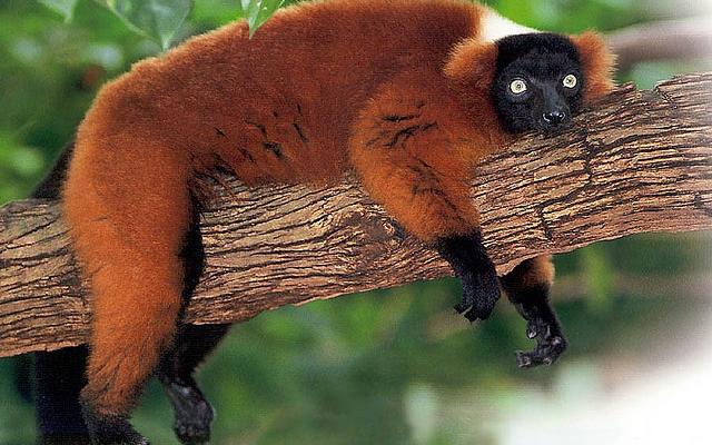 https://i1.wp.com/photos.pouryourheart.com/wp-content/uploads/2018/12/Madagascar-forest-animal.jpg?w=640