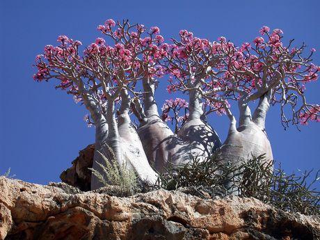 https://i1.wp.com/photos.pouryourheart.com/wp-content/uploads/2018/12/amazing-tree-in-yemen.jpg?w=640