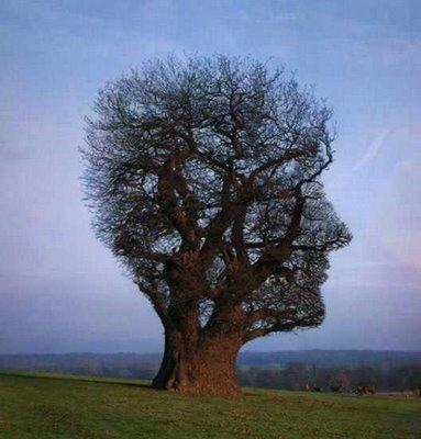 https://i1.wp.com/photos.pouryourheart.com/wp-content/uploads/2018/12/amazing-trees-21.jpg?w=640