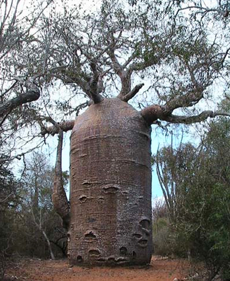 https://i1.wp.com/photos.pouryourheart.com/wp-content/uploads/2018/12/baobob-tree.jpg?w=640