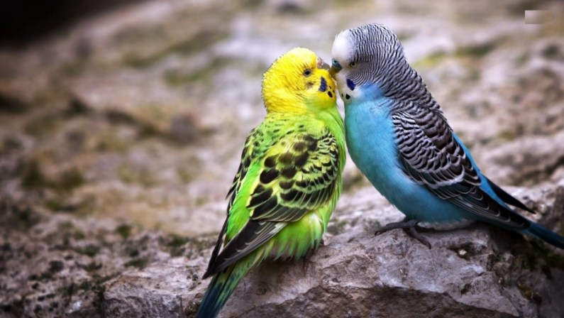 Bird Wallpapers National Geographic TV