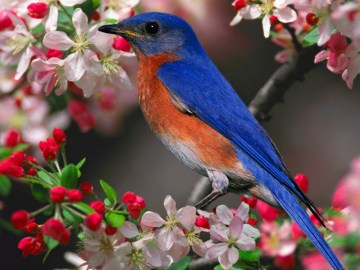 3d bird picture free download