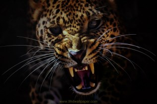 Wallpaper Wild Leopard Face in High Quality