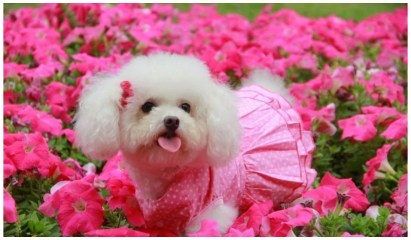Cute Baby dog images photos