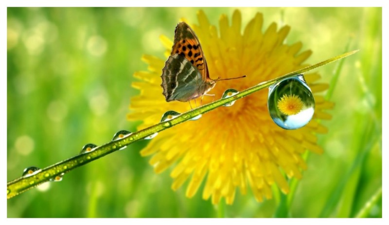 Download Water Droplet Flower Reflection