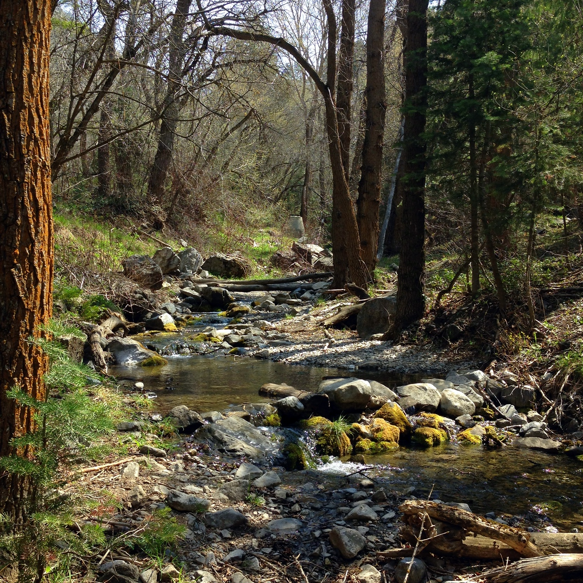 A Gentle Stream Along Provo's Rock Canyon Trail