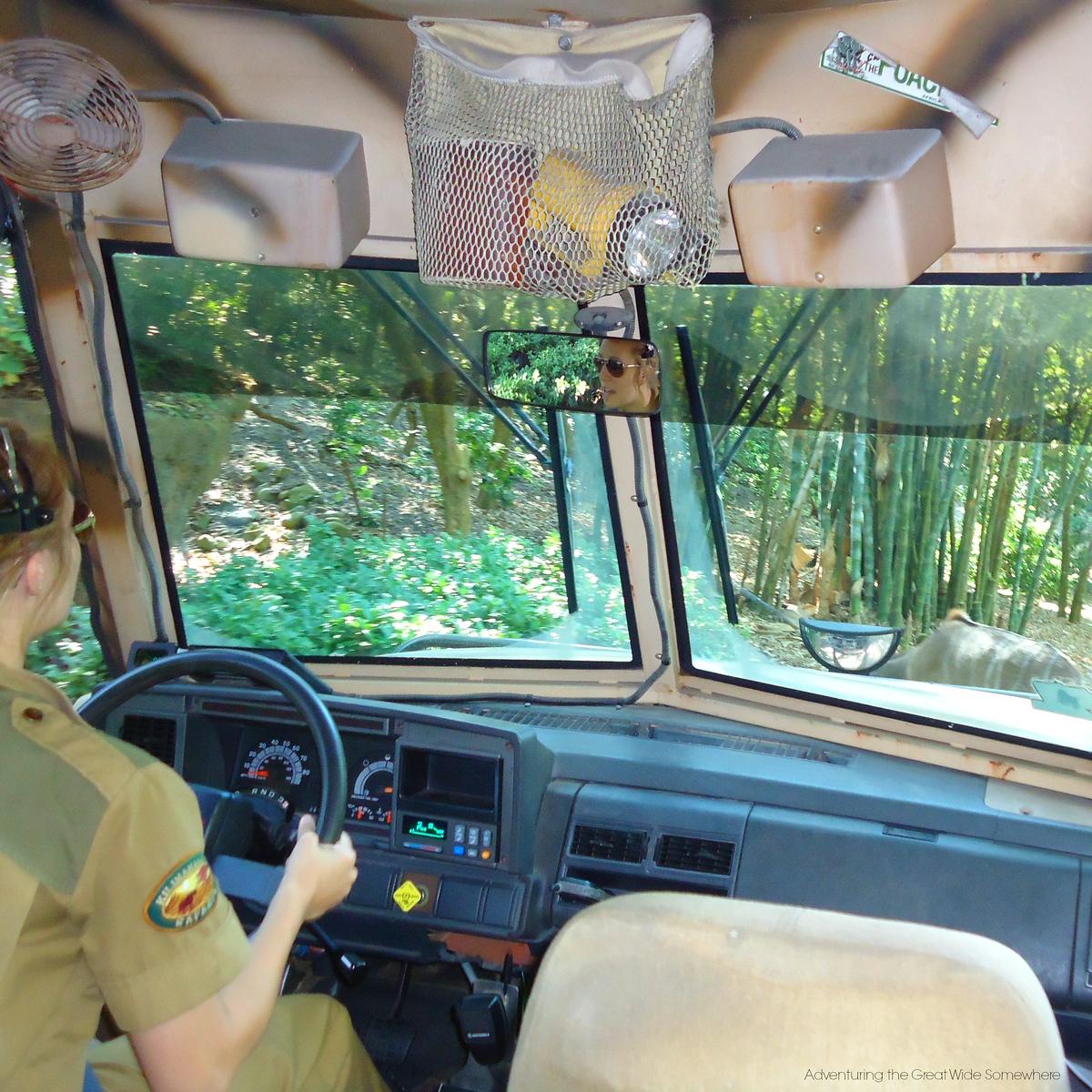 Behind the Wheel of Kilimajaro Safaris at Disney's Animal Kingdom