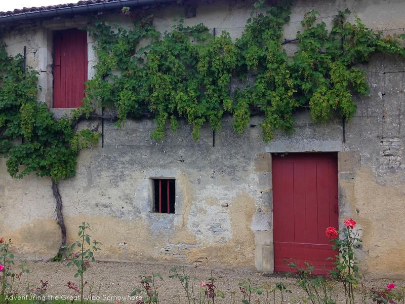 Grape Vines Covering the Chateau de Gudmont in France