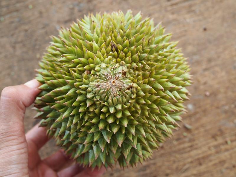 D4 Melaka Durian