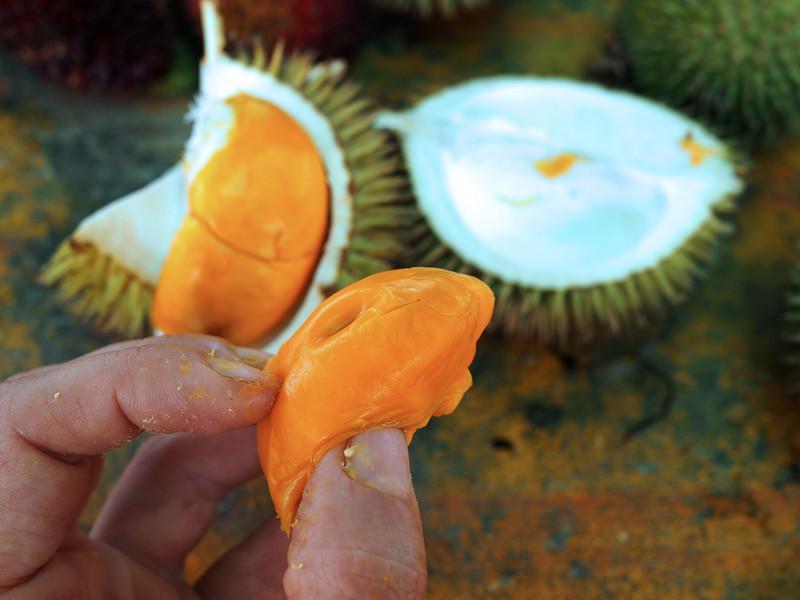 wild durians