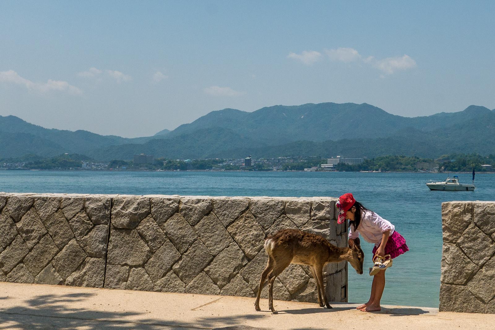 bowing deer miyajima island
