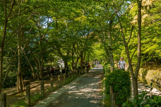 Path of Philosophy in Kyoto