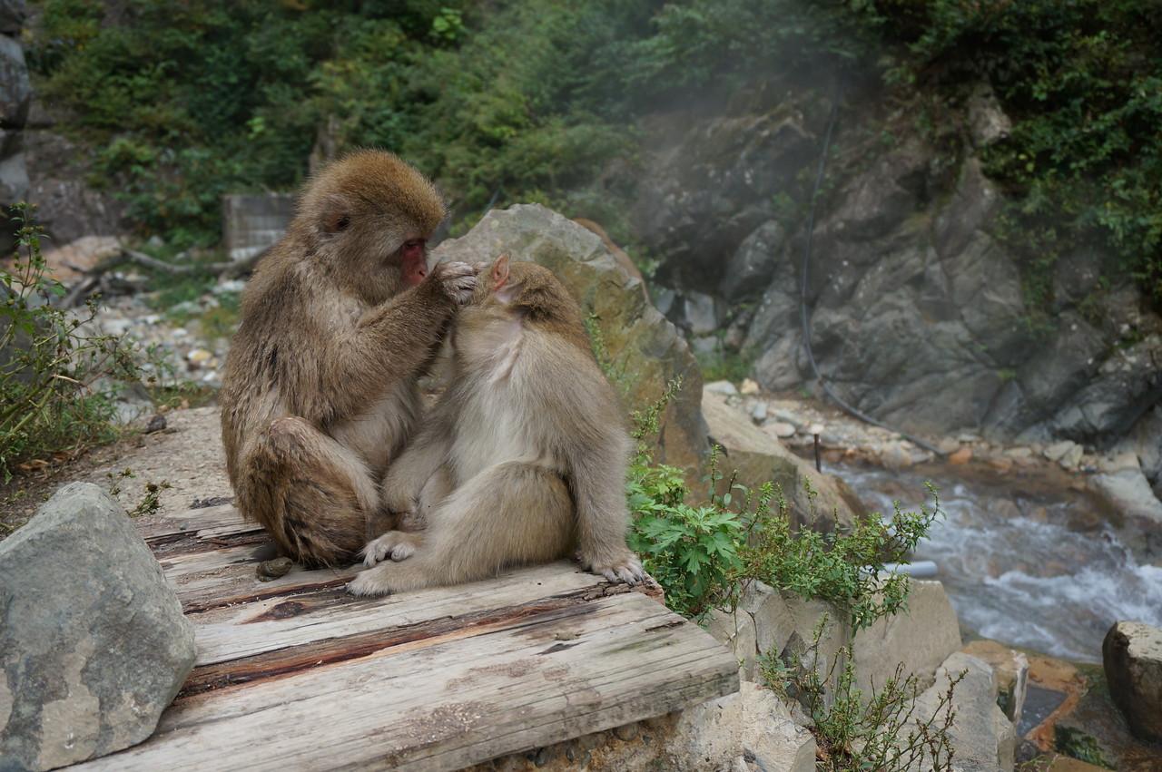 A trip to the snow monkey dentist