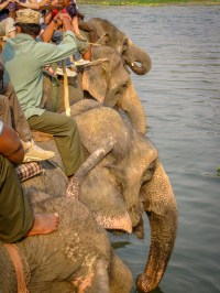 visiting chitwan national park