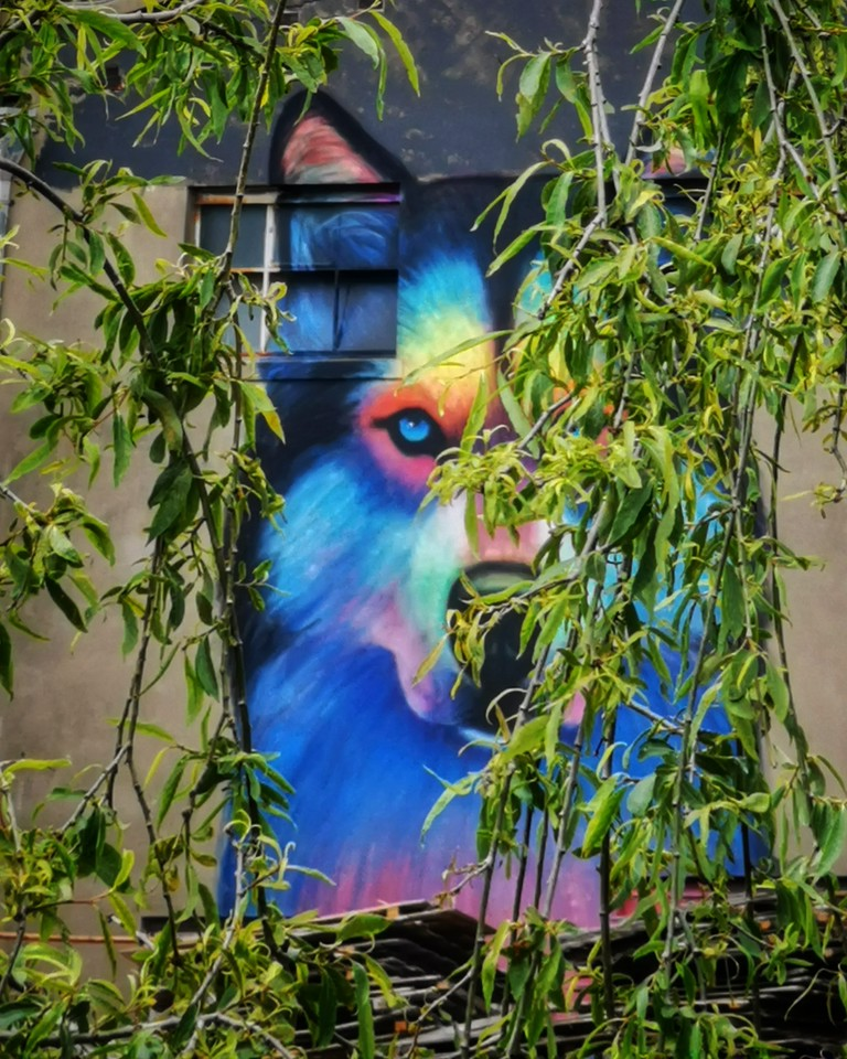 Hiding Wolf - Interview with Silly Sully - StreetArtChat.com