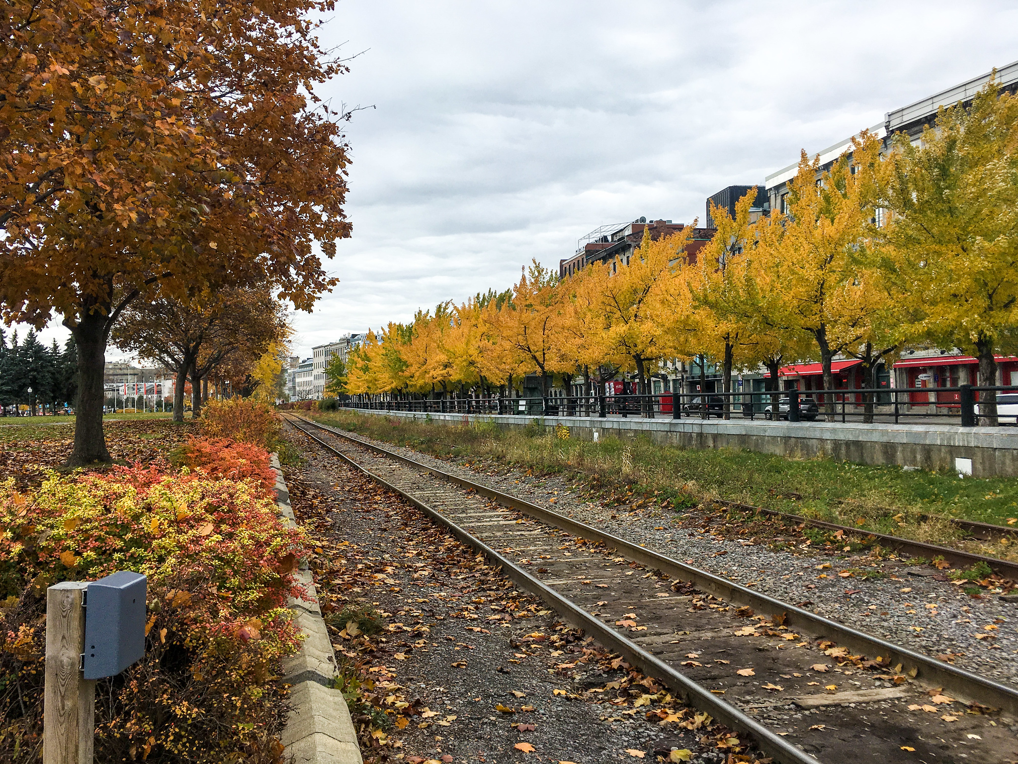 bundle up on your solo trip to montreal - even in fall