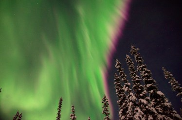 aurora borealis over fairbanks alaska