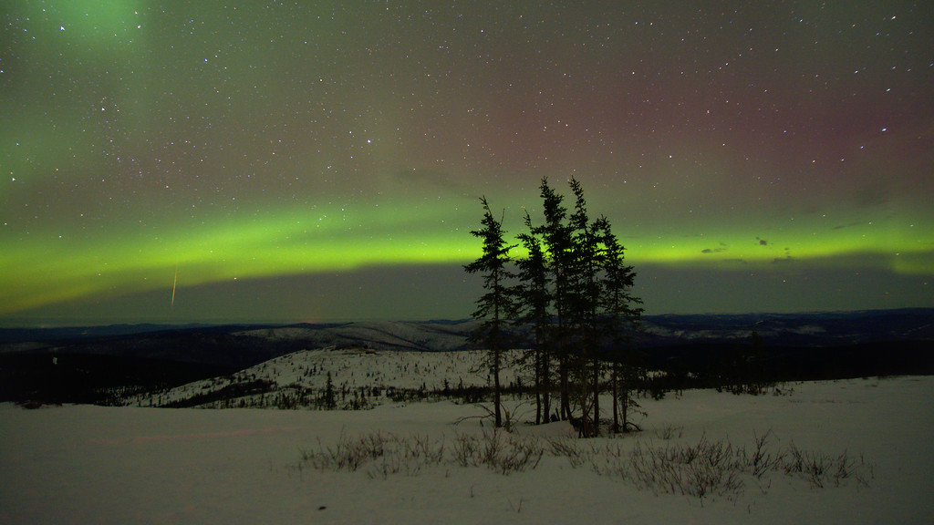 Aurora borealis and a Meteor over a stand of spruce on Murphy Dome.